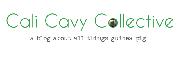 Cali Cavy Collective: a blog about all things guinea pig