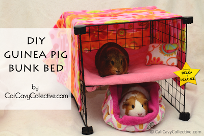 cool diy guinea pig projects fluffy piggies