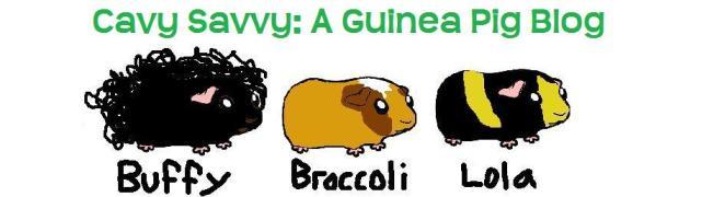 Cavy Savvy: A Guinea Pig Blog